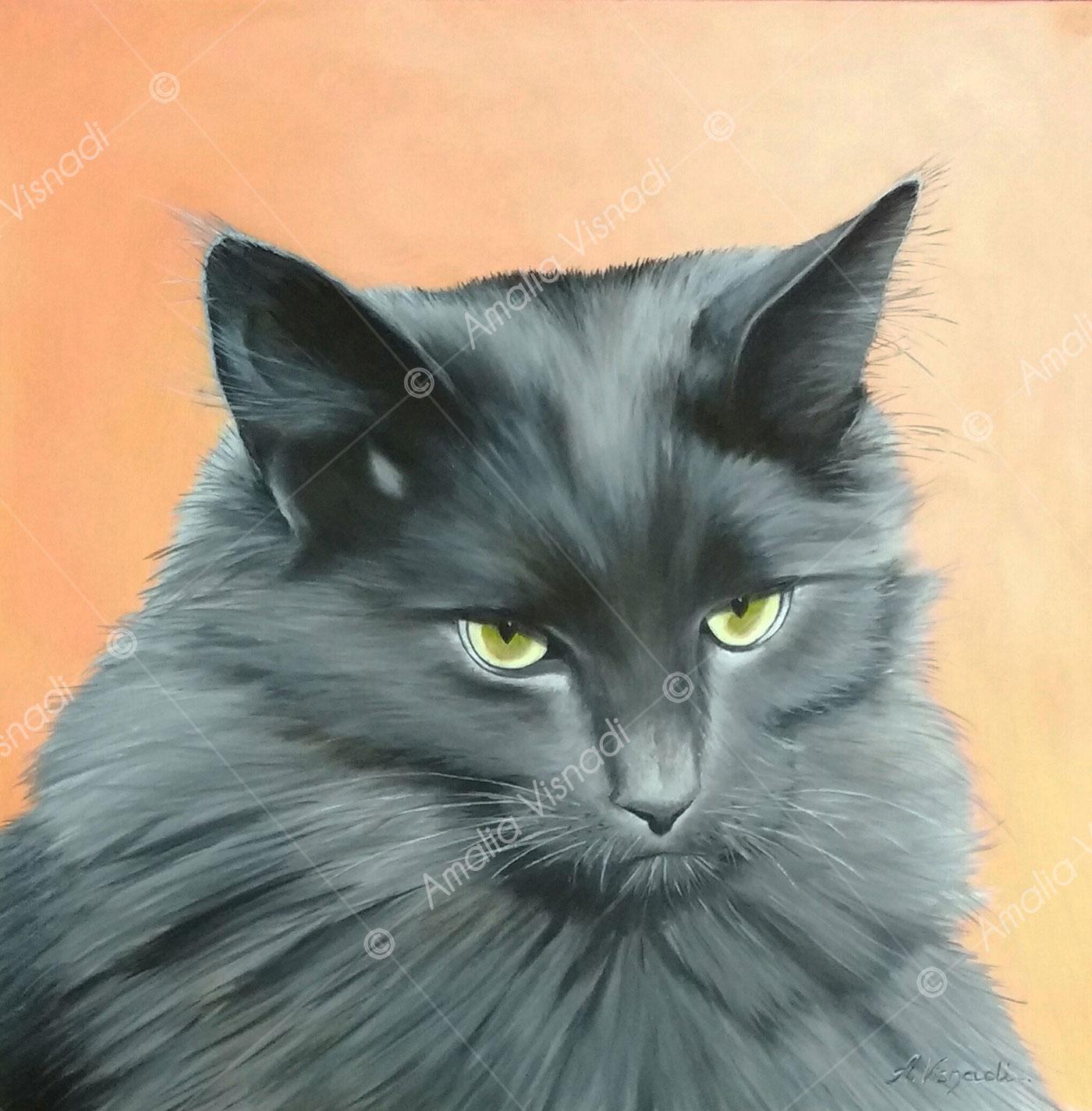 Ritratto di gatto meticcio europeo_Olio su Tela 40 x 40