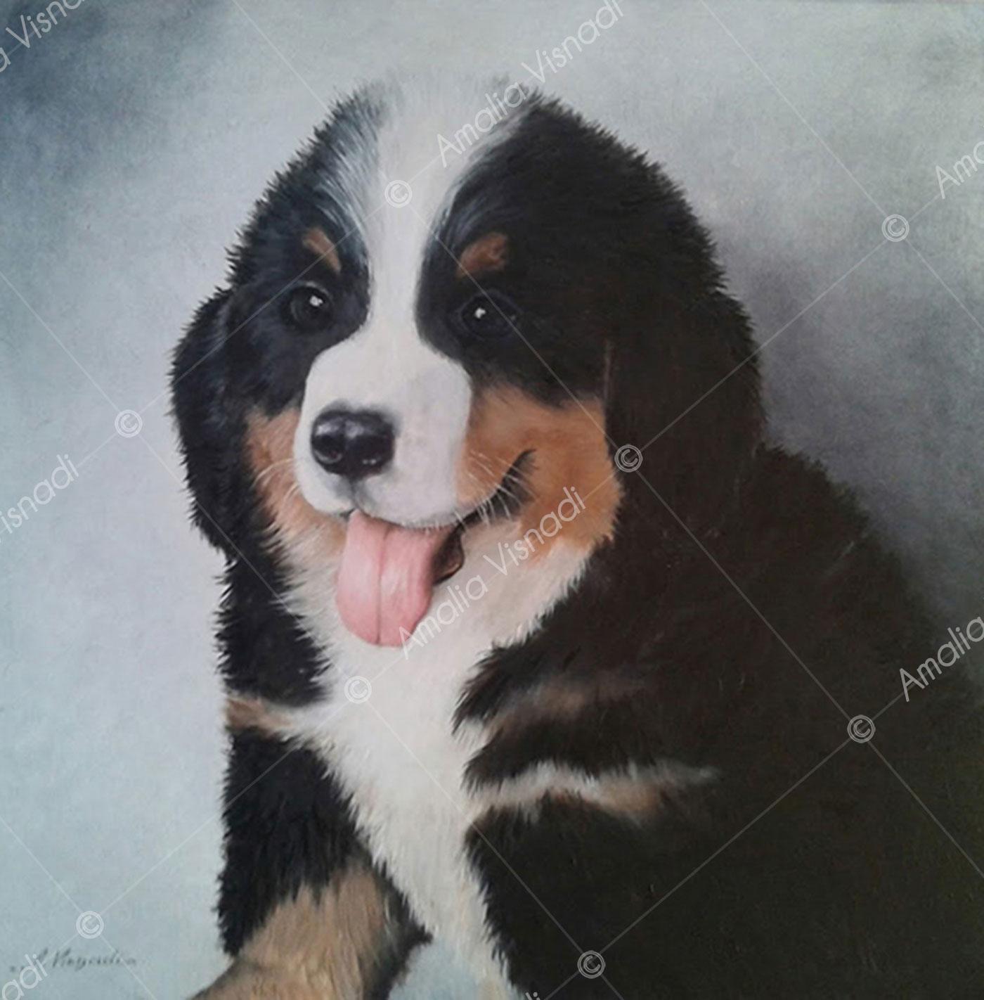 Ritratto di cucciolo di pastore bernese_Olio su Tela 40 x 40